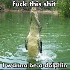 dolphingator