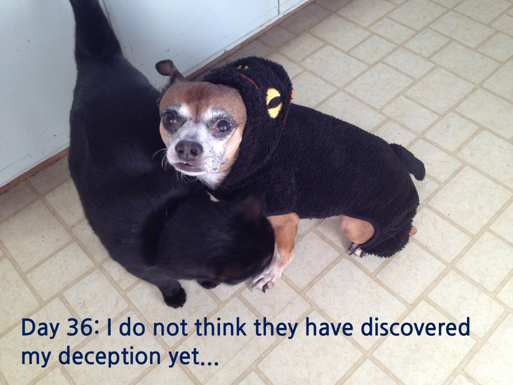 Day 36: I do not think they have discovered my deception yet...