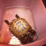 #tortielife - Soaking.